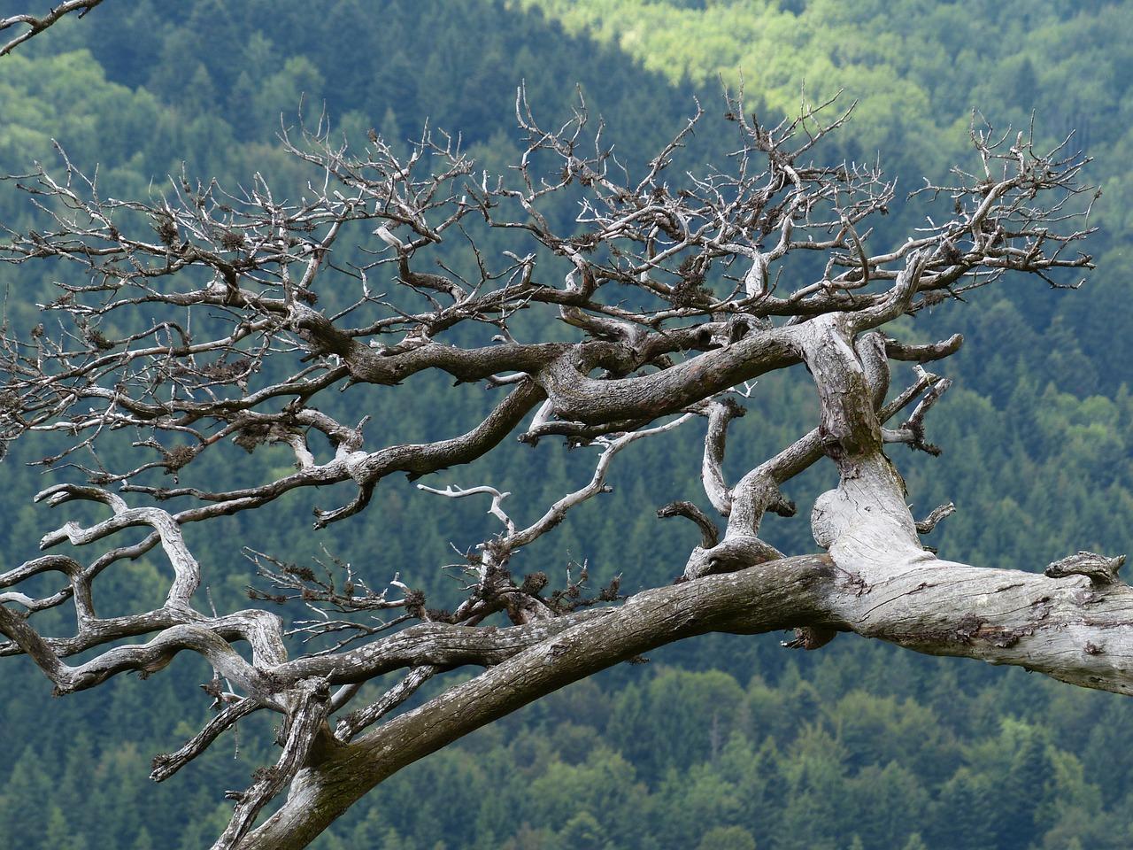 branches mortes décoratives