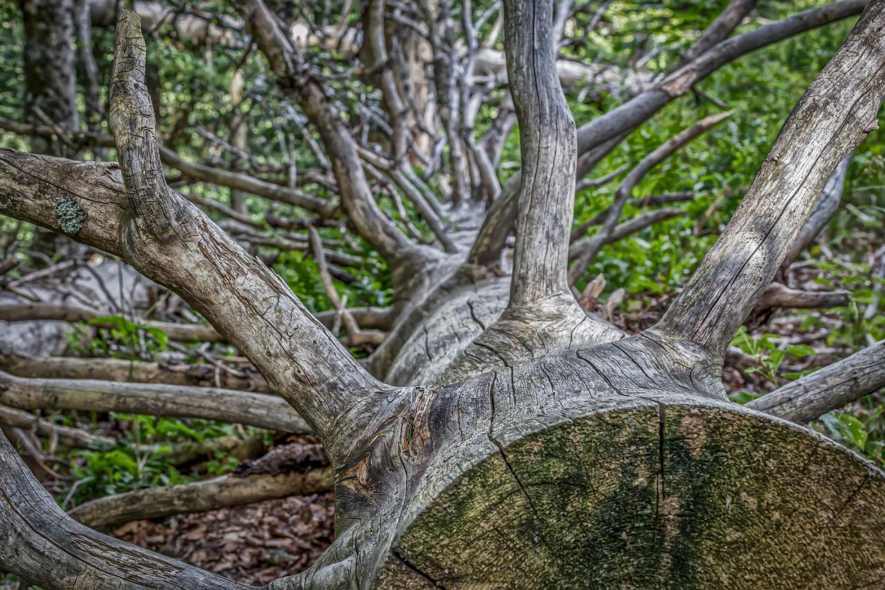 branches mortes