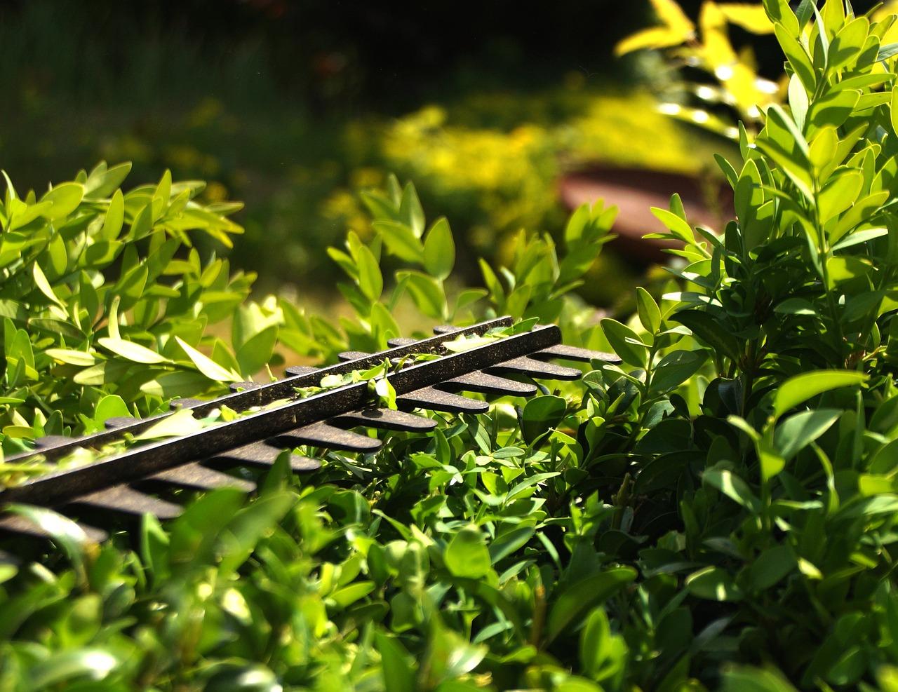 coupe-bordure-jardin