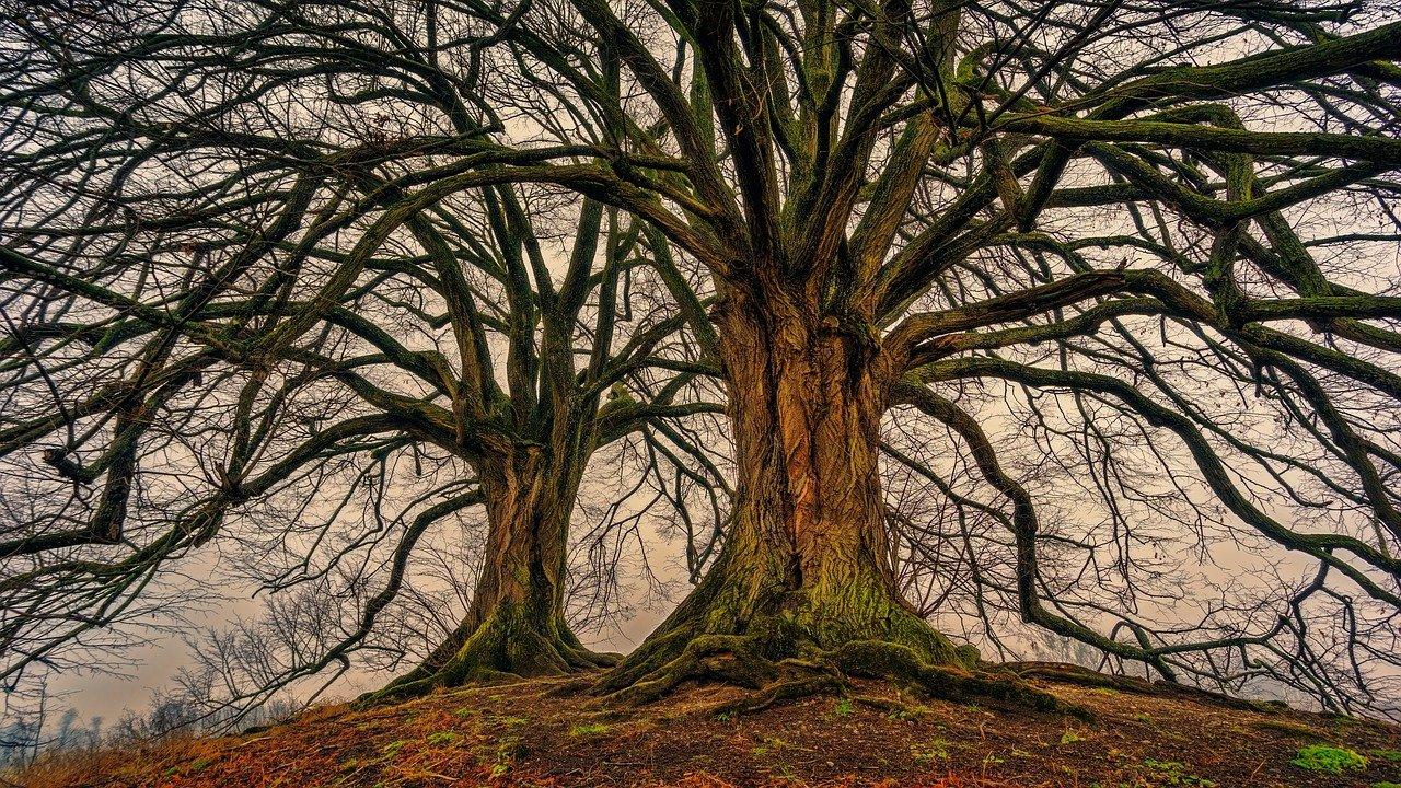 arbres à ne pas planter