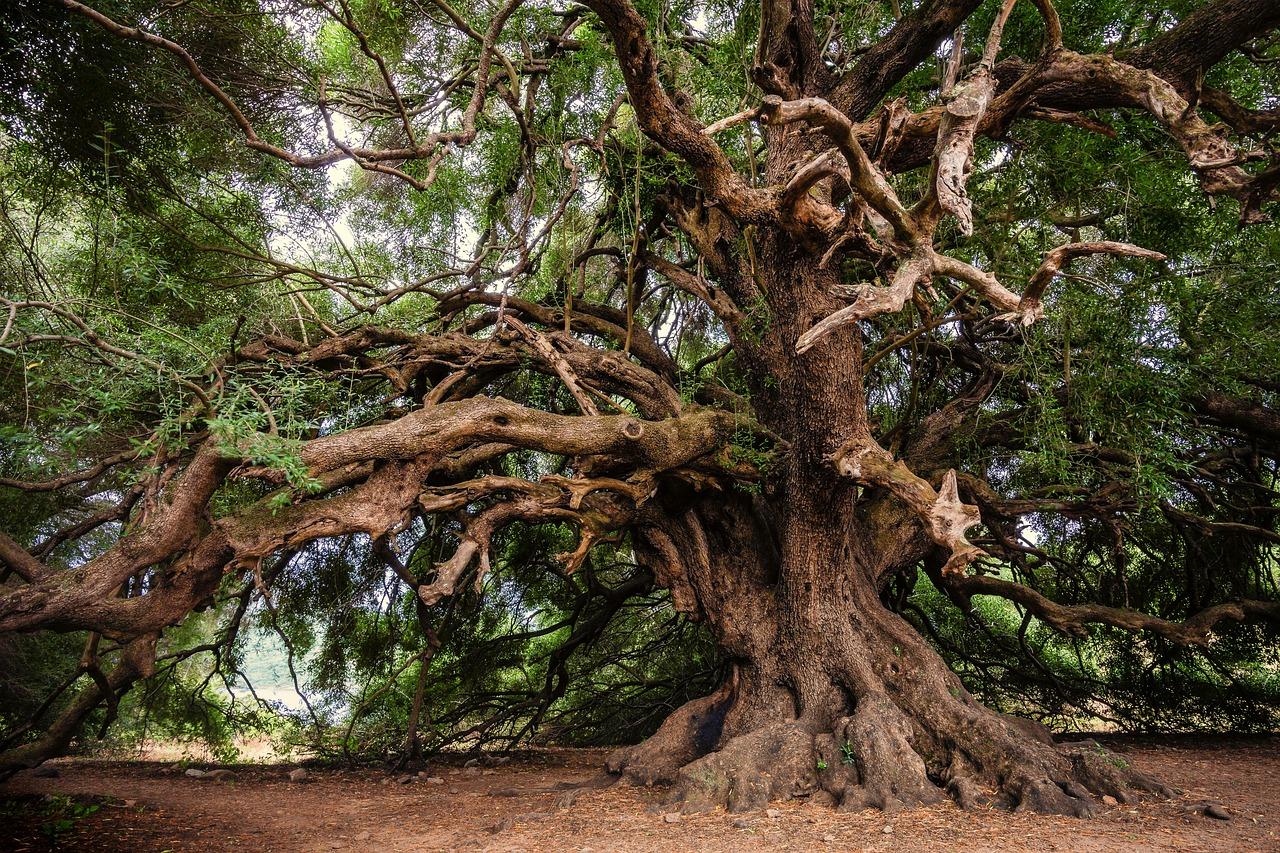 variétés d'arbres à éviter